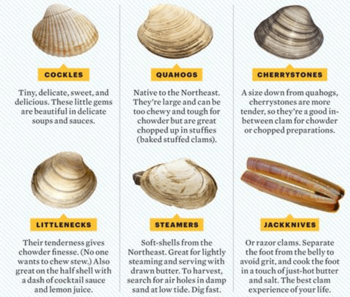clams types