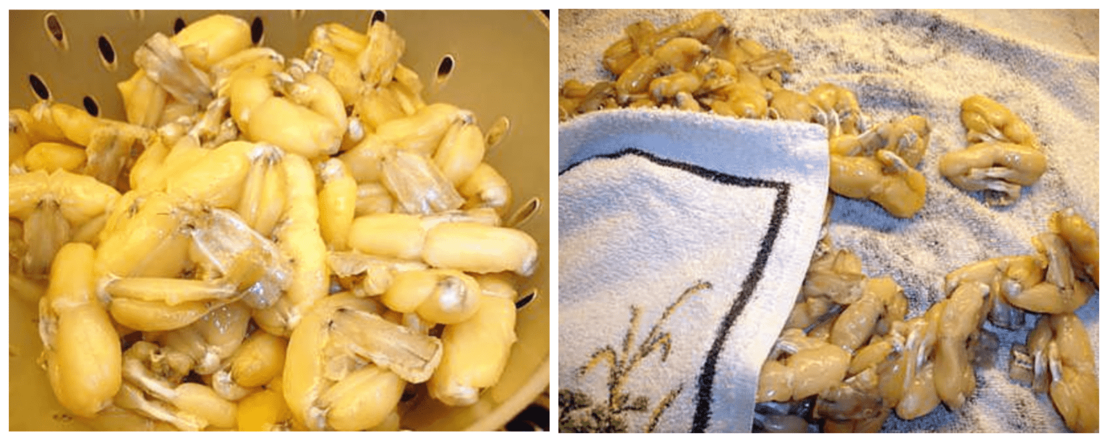 washing and preparation of the frog legs